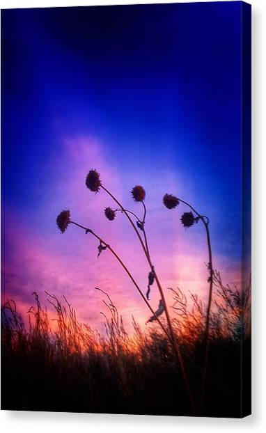 Fall Sunrise Canvas Print by Tim Abshire