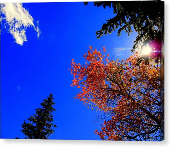 Canvas Print featuring the photograph Fall Up by Karen Shackles