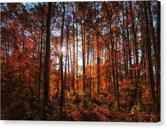 Great Dismal Canvas Print - Fall Woods #2 by Mike Cockrill