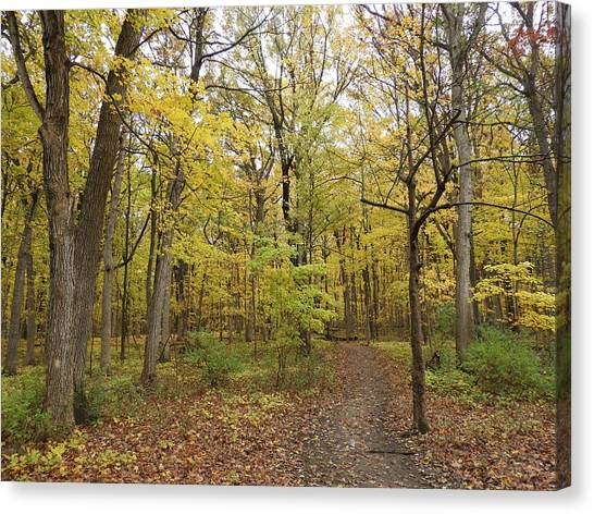 Canvas Print - Fall Woods by Red Cross