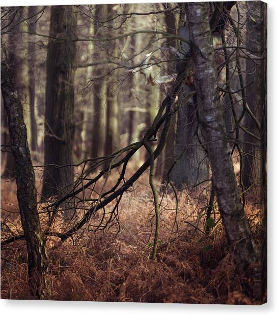 Sherwood Forest Canvas Print - Fallen by Chris Dale