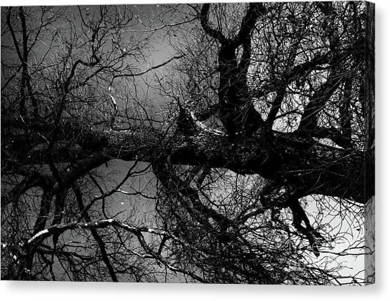 Fallen Dark Wood Forest Canvas Print