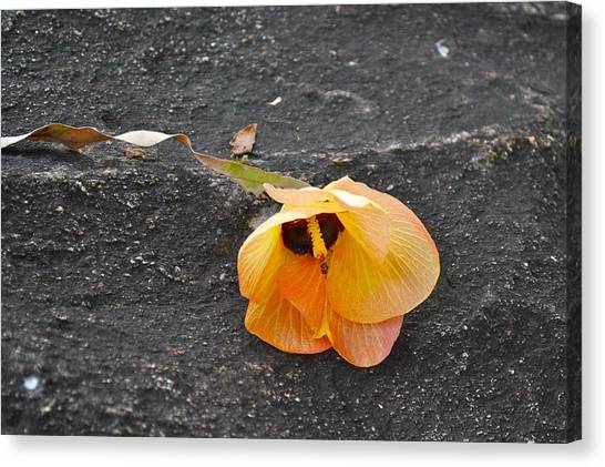 Fallen Flower Canvas Print