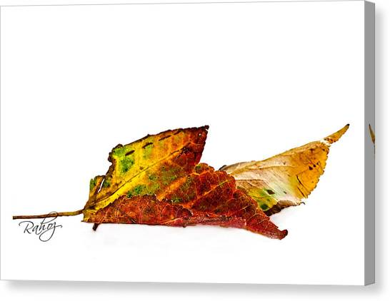 Fallen In Fall  Canvas Print by Rahat Iram