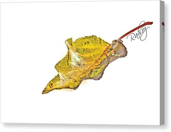 Fallen Leaf Canvas Print by Rahat Iram