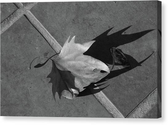 Fallen Leaf Canvas Print by Yavor Kanchev