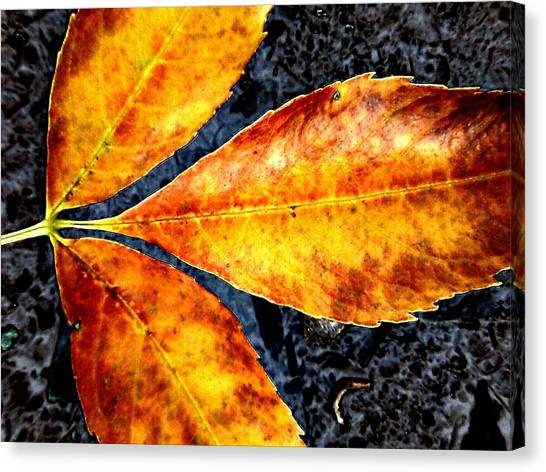 Fallen Leaves Canvas Print by Beth Akerman