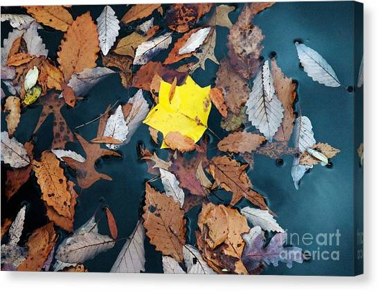 Fallen Leaves Canvas Print by Hideaki Sakurai