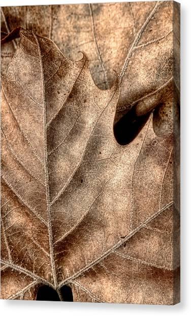 Autumn Abstract Canvas Print - Fallen Leaves II by Tom Mc Nemar
