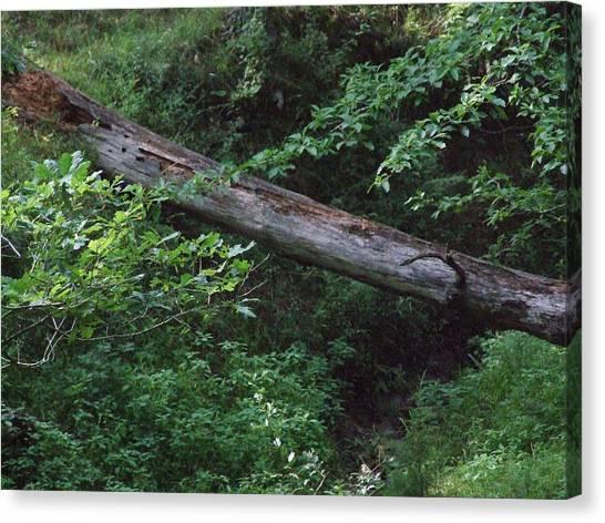 Fallen Log Canvas Print by Michael L Kimble