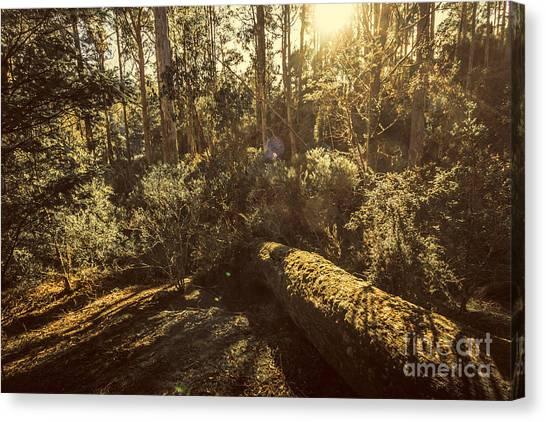 Fallen Tree Canvas Print - Fallen Tree In Foliage by Jorgo Photography - Wall Art Gallery
