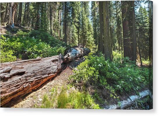 Fallen Tree- Canvas Print