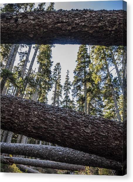 Fallen Tree Canvas Print - Fallen Trees by Pelo Blanco Photo