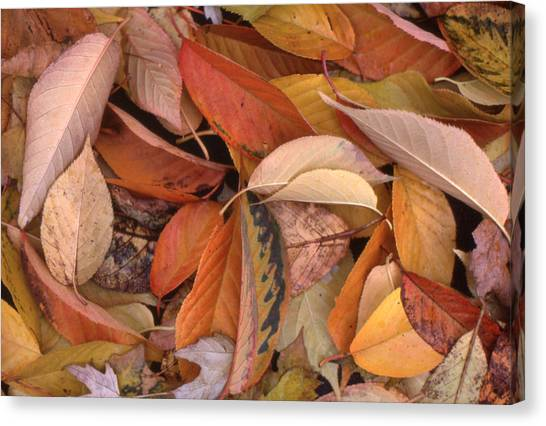 Falling Leaves On The Ground Canvas Print by Lyle Crump