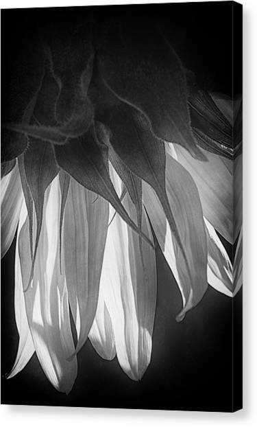 Falling Monochrome  Canvas Print
