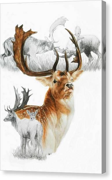 Canvas Print - Fallow Deer by Barbara Keith