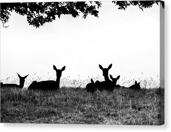 fallow Deer Canvas Print by Yorkshire In Colour