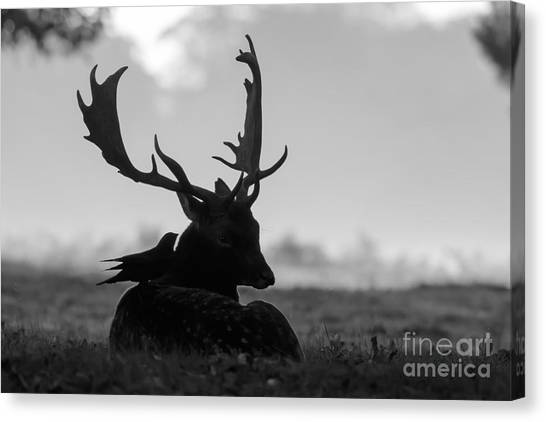 Fallow Deer With Friend - Black And White Canvas Print