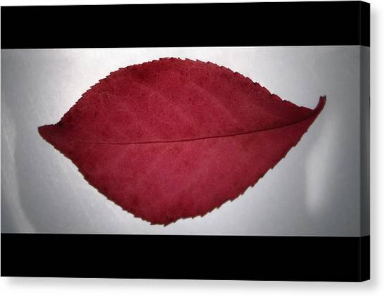 Fall's Kiss Canvas Print