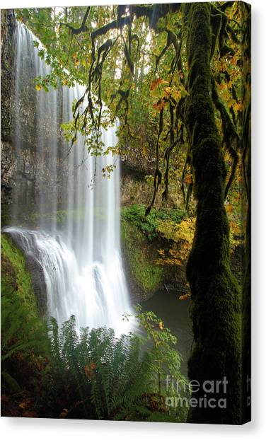 Falls Though The Trees Canvas Print