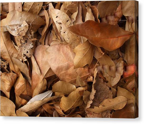 Family Of Leaves Canvas Print by Janet  Telander
