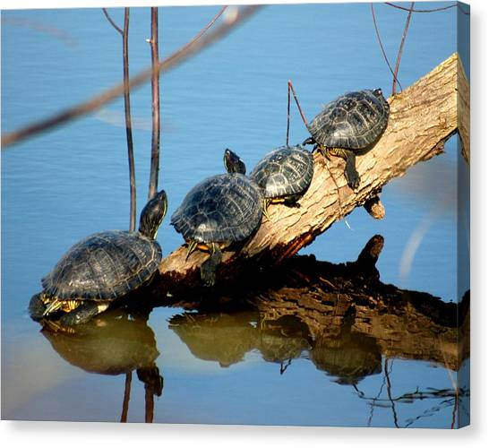 Family Of Turtles Canvas Print by Bob Guthridge
