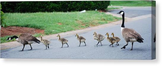 Family Outing Canvas Print by Trudi Southerland