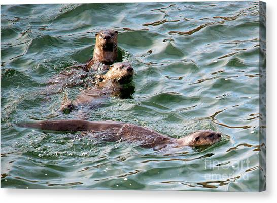 Otters Canvas Print - Family Play Time by Mike Dawson