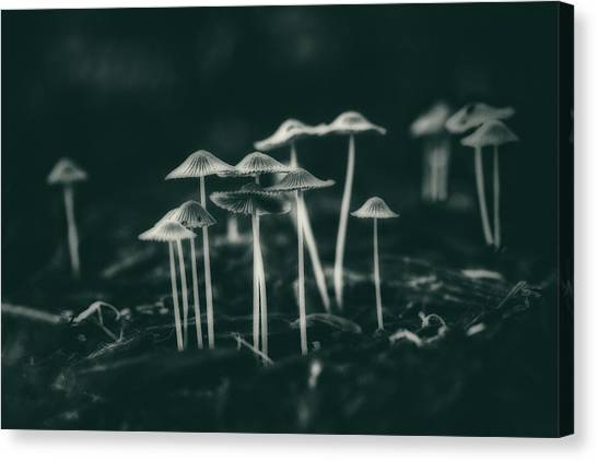 Mushrooms Canvas Print - Fanciful Fungus by Tom Mc Nemar