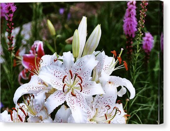Fancy White Lily In Garden Canvas Print