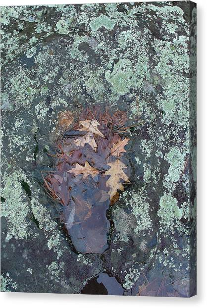 Fantom In The Weathered Bluestone Canvas Print