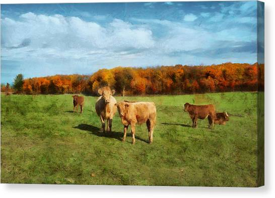 Farm Field And Brown Cows Canvas Print