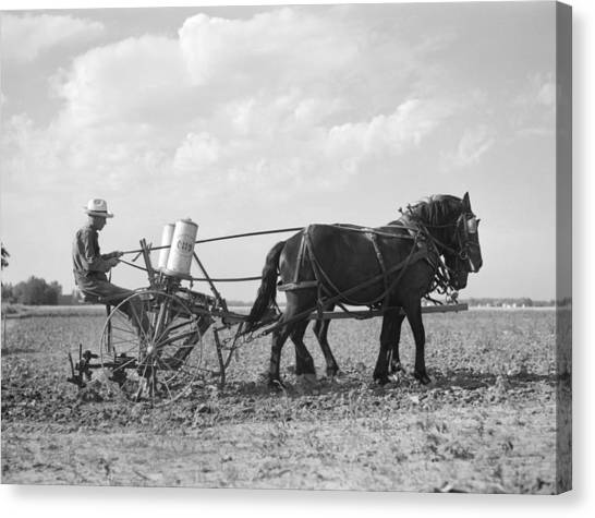 Fertilize Canvas Print - Farmer Fertilizing Corn by Arthur Rothstein