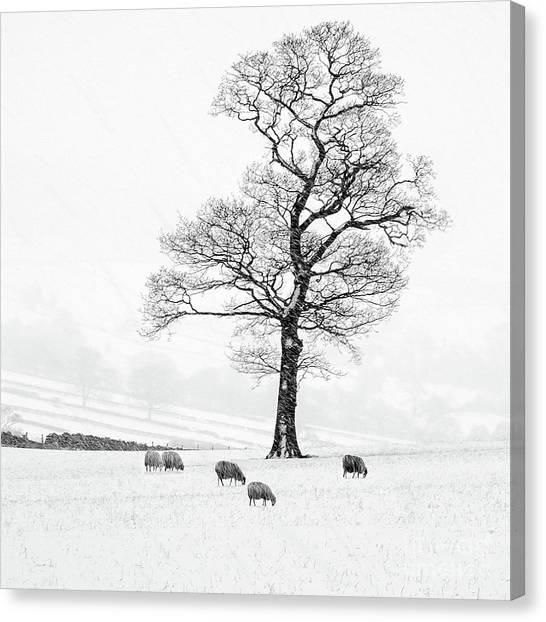 Sheep Canvas Print - Farndale Winter by Janet Burdon