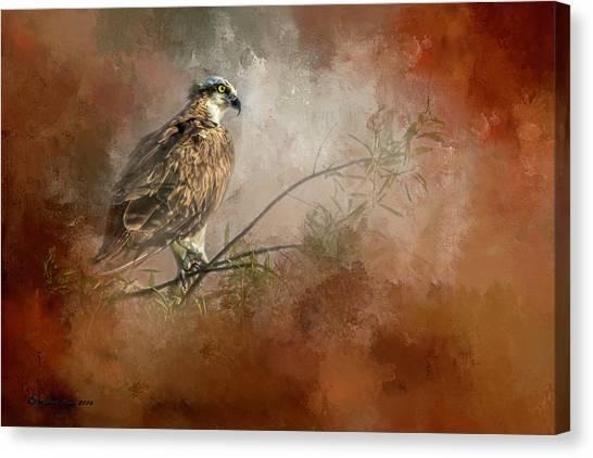 Osprey Canvas Print - Farsighted Wisdom by Marvin Spates