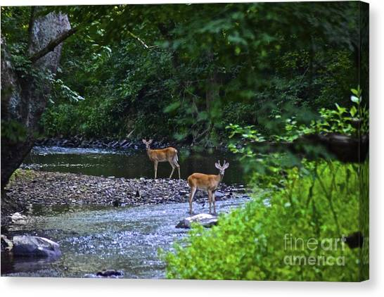 Fascinated Canvas Print