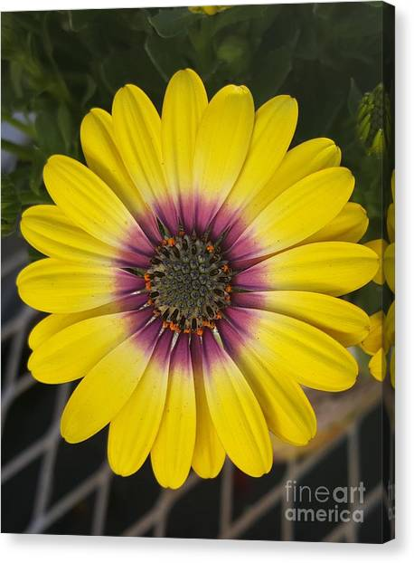 Fascinating Yellow Flower Canvas Print