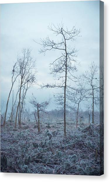 Sherwood Forest Canvas Print - Father by Chris Dale