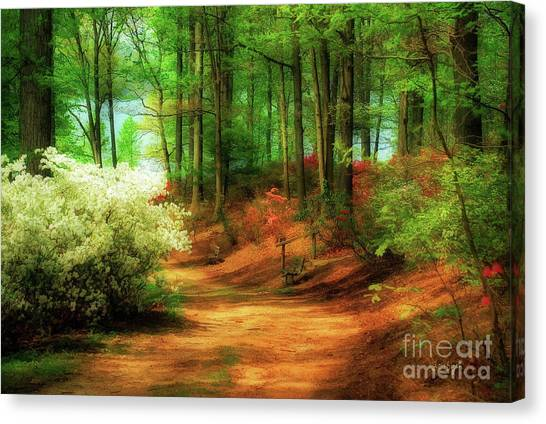 Favorite Path Canvas Print