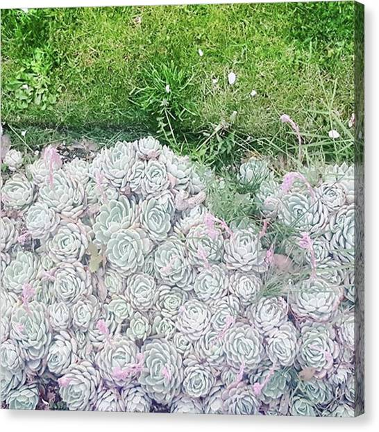 Favourites Growing Outside A Flat Round Canvas Print by Natalie Anne