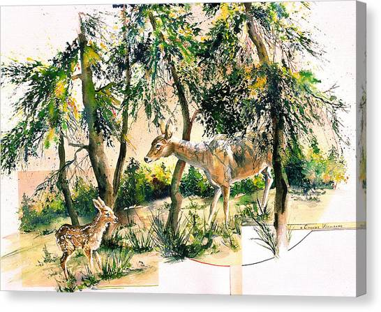 Fawn And Doe Canvas Print