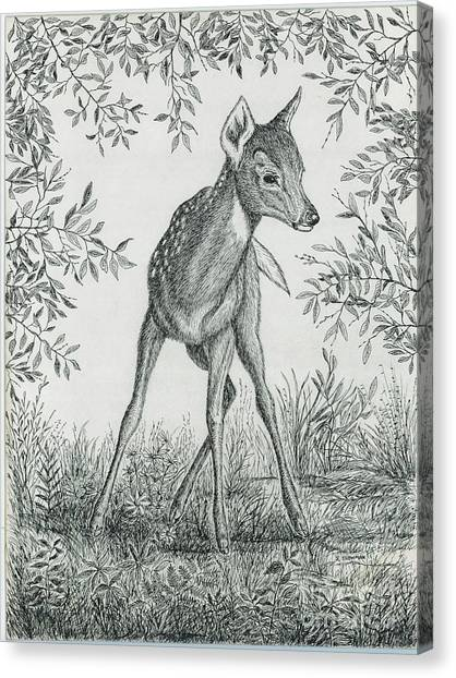 Fawn In Clearing Canvas Print by Samuel Showman