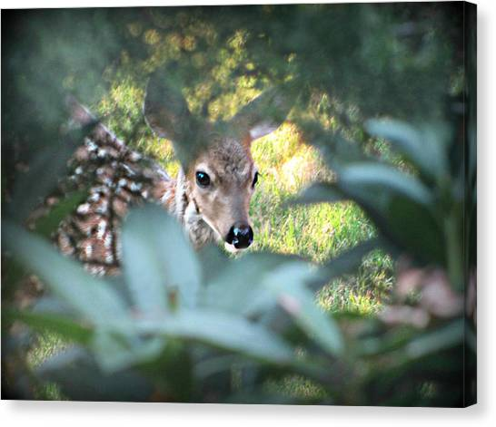 Fawn Peeking Through Bushes Canvas Print