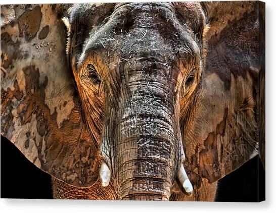 Elephants Canvas Print - Fearless by Janet Fikar