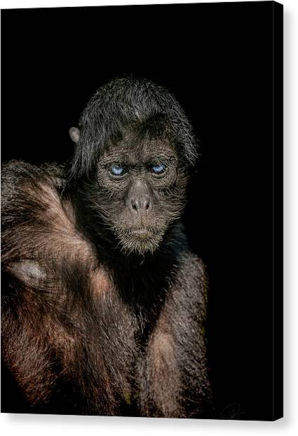 Primates Canvas Print - Fearless by Paul Neville