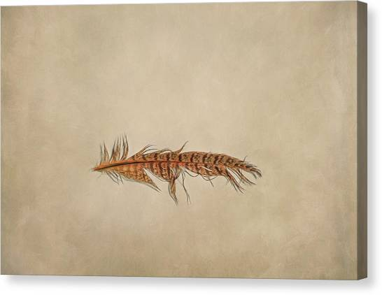 Indoor Still Life Canvas Print - Feather 2 by Scott Norris