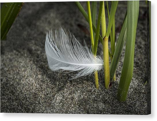 Feather And Beach Grass Canvas Print