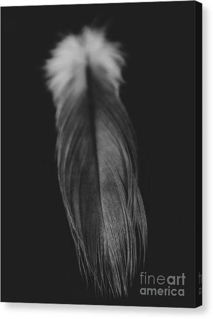 Feather In Black And White Canvas Print