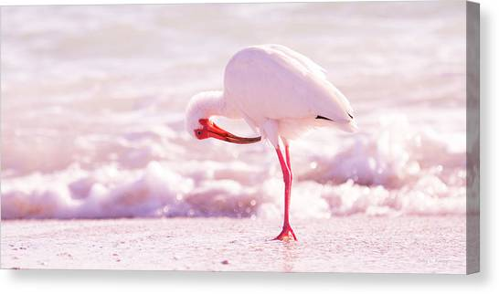 Ibis Canvas Print - Feather Out Of Place by Betsy Knapp