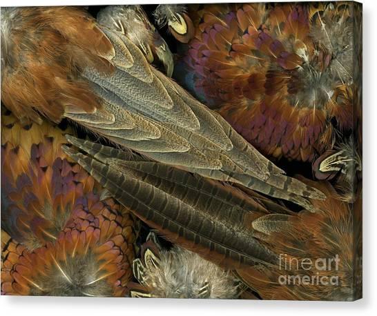 Featherdance Canvas Print